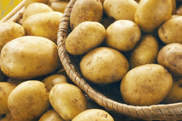 холандски сортове картофи, Agrozona.bg