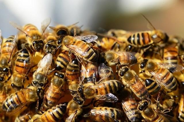 Калоян Кисов, пчели, Agrozona.bg