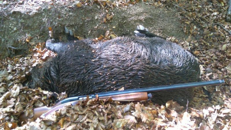 диви прасета, лов, Agrozona.bg