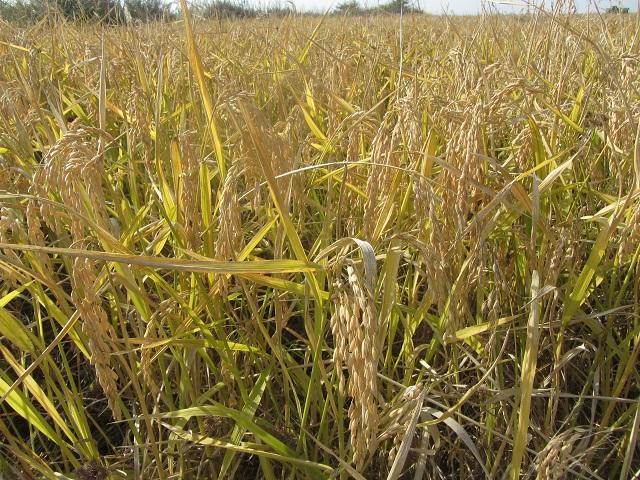 Година на растенията, ООН, Agrozona.bg