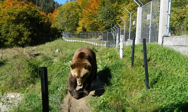 Мадан, мечка, Agrozona.bg