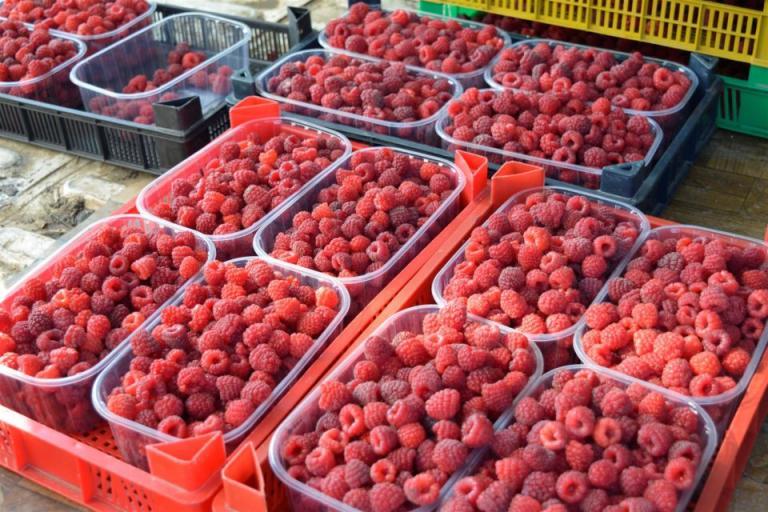 био земеделие, биопроизводство, Agrozona.bg