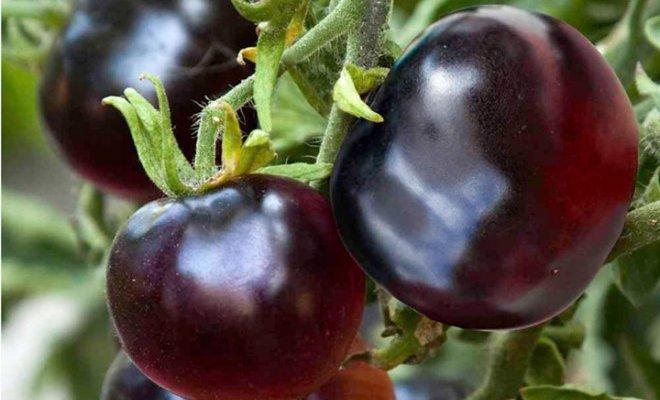 зеленчуци, храни, Agrozona.bg