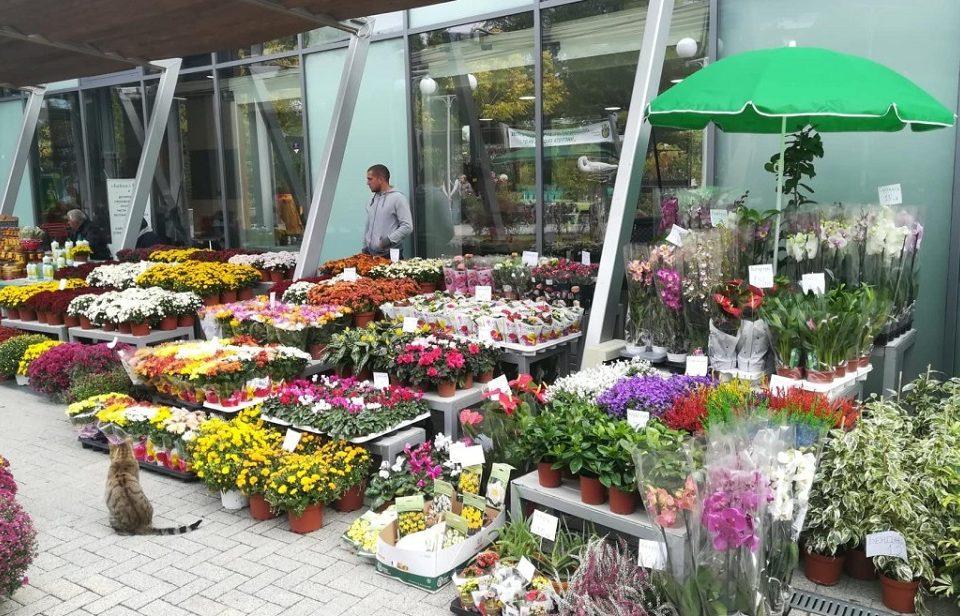 Започна прием на заявления за празничния базар на цветя в Перник