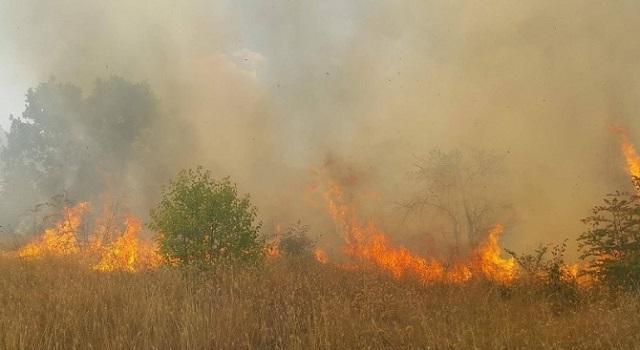 Кюстендил, пожари, Agrozona.bg