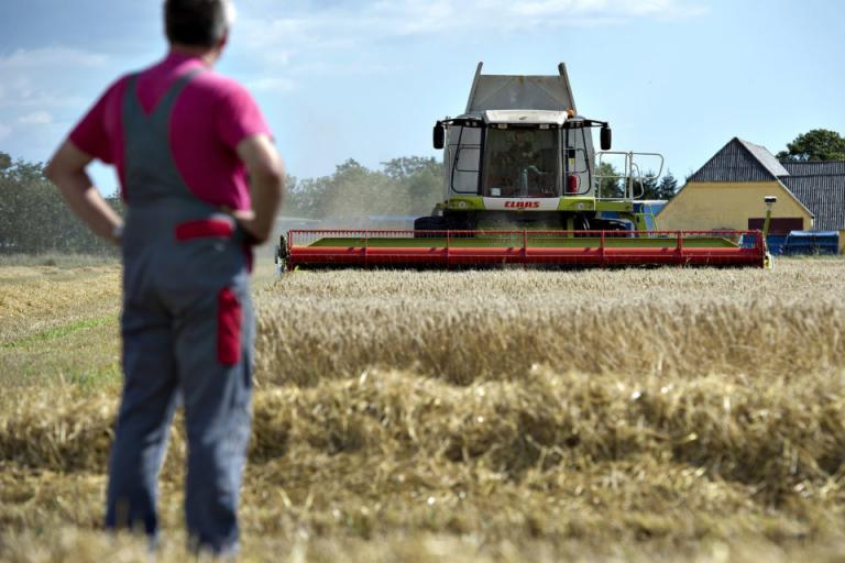 zarno grain -agrozona-bg