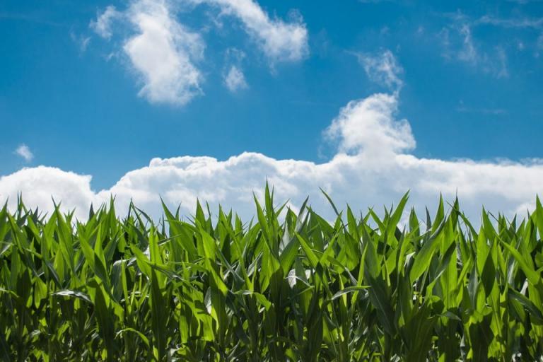 земеделие, растителна защита, Agrozona.bg