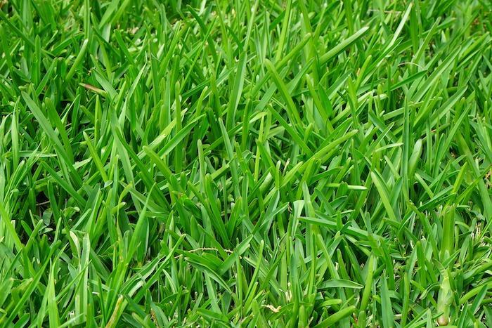 месо, трева, Agrozona.bg