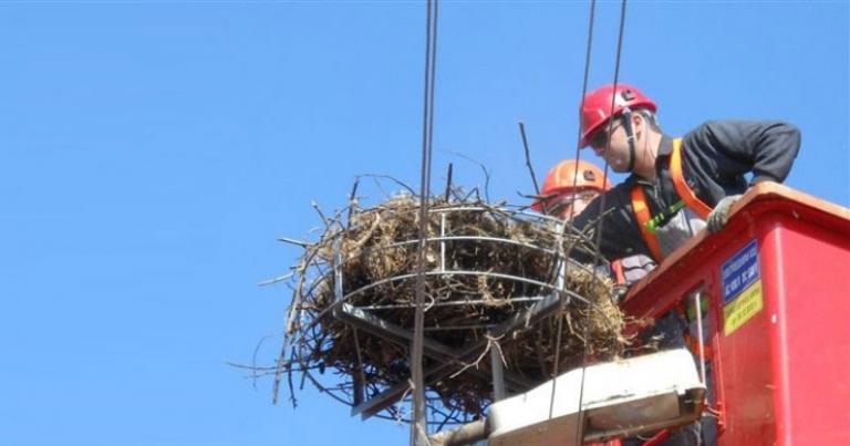гнезда, инициатива, Agrozona.bg
