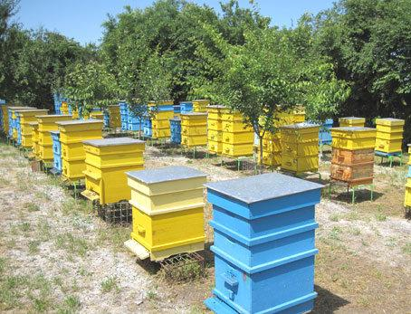 март, пчеларство, Agrozona.bg