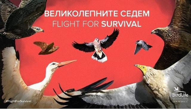 БДЗП, птици, Agrozona.bg
