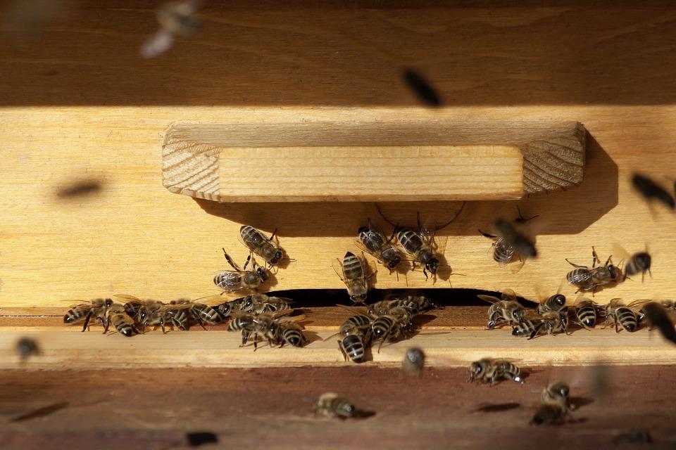 ЕС, пчеларство, Agrozona.bg