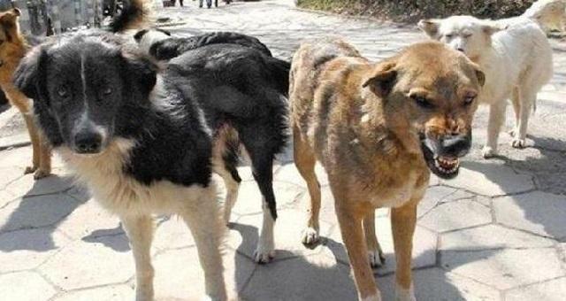 бездомните кучета, Кърджали, Agrozona.bg