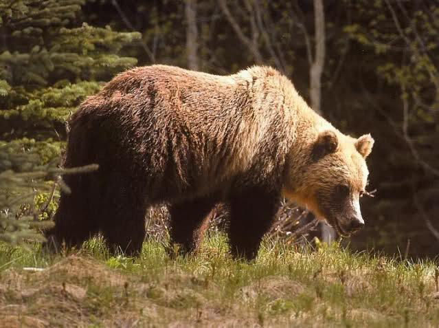 мечки, Смолян, Agrozona.bg