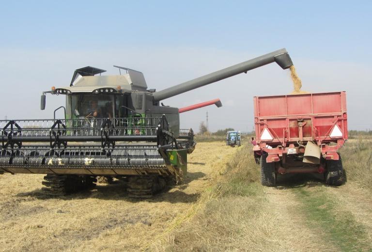 пшеница, слънчоглед, Agrozona.bg