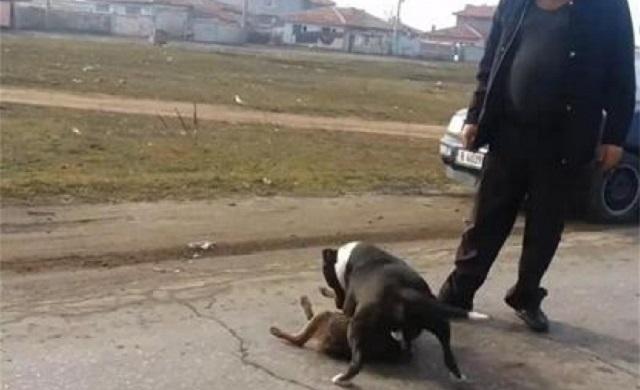арести, боеве, Agrozona.bg