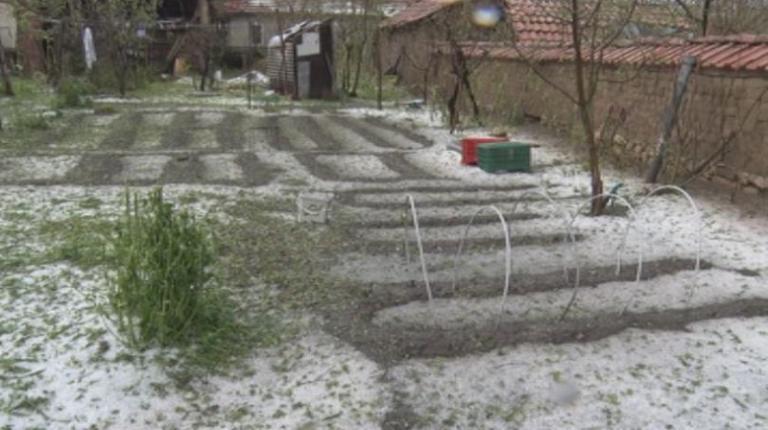 градушка, Русенско, Agrozona.bg