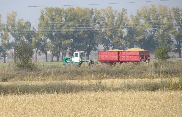 зърно, износ, Agrozona.bg