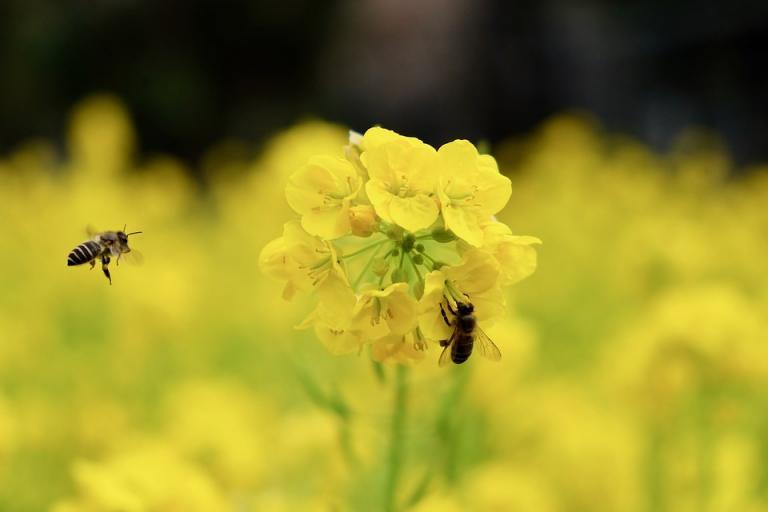 нектар, пристрастяване, Agrozona.bg