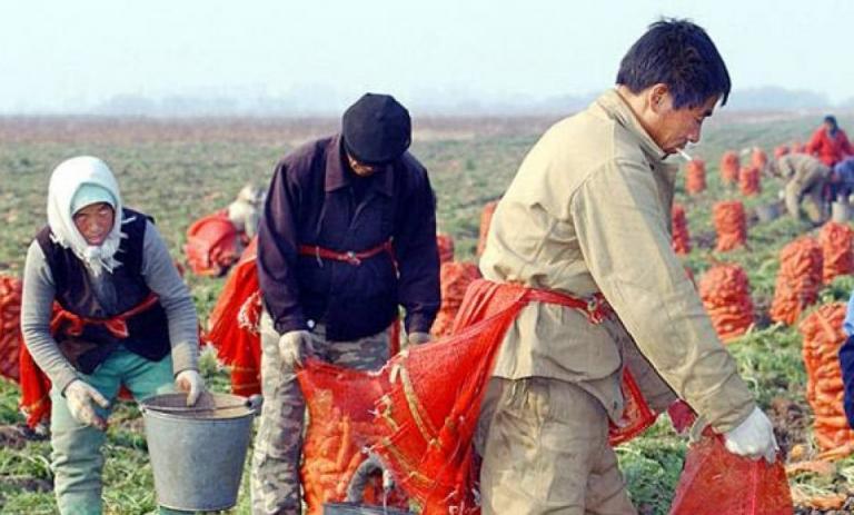 земеделие, Китай, Agrozona.bg