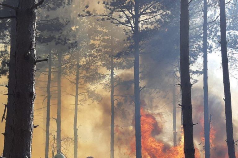 гори, пожари, Agrozona.bg