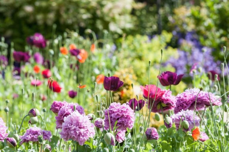 диви цветя, доклад, Agrozona.bg