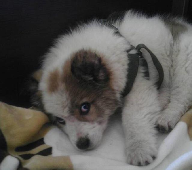 Kучета, Agrozona.bg