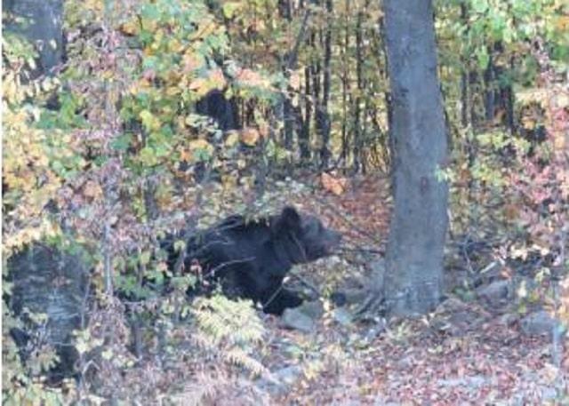мечка, набези, Agrozona.bg