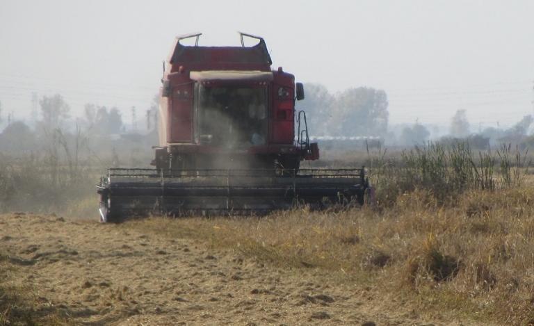 жътва, зърно, Agrozona.bg