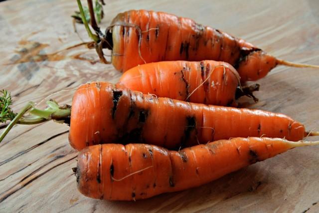 мерки, морковена муха, Agrozona.bg