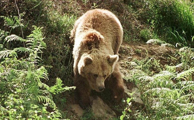 бракониер, мечка, Agrozona.bg