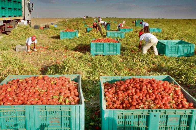 домати, Италия, Agrozona.bg