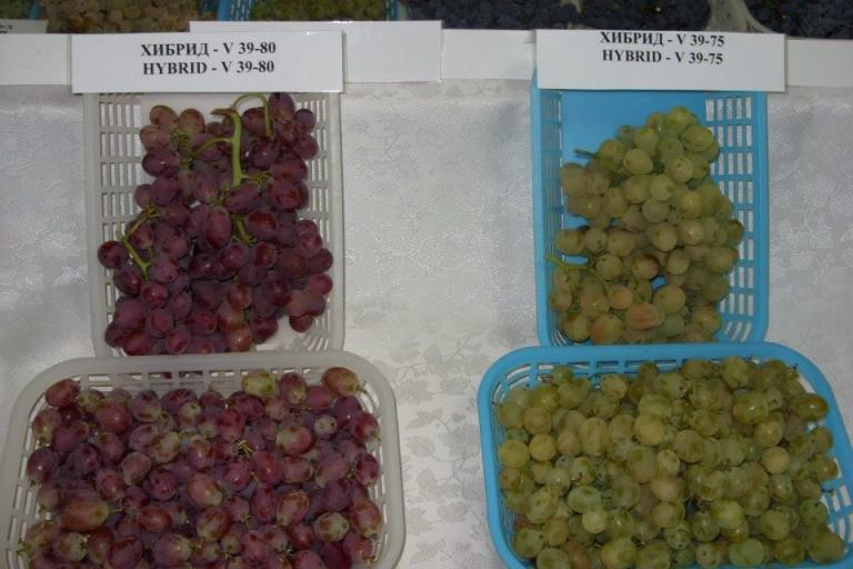грозде, дегистация, Agrozona.bg