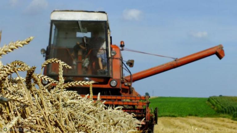 Добрич, пшеница, Agrozona.bg