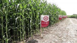 Лимагрейн представи последните иновации в царевичното производство