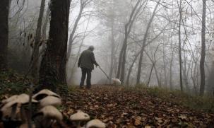 Гъбари: Гонят ни от горите, за да ги ползват само за лов