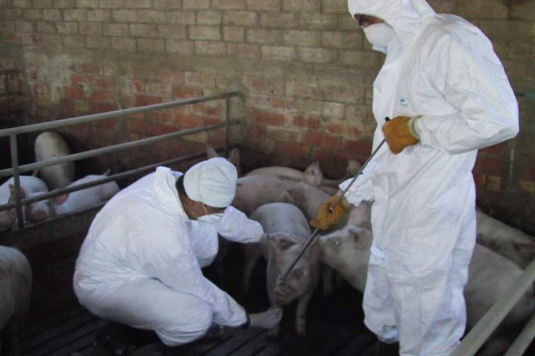 Ку-треска, официални ветеринарни лекари, Agrozona.bg
