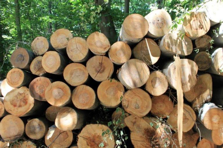 гори, дървесина, Agrozona.bg