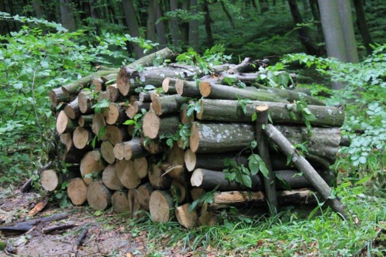горски служители, дървесина, Agrozona.bg