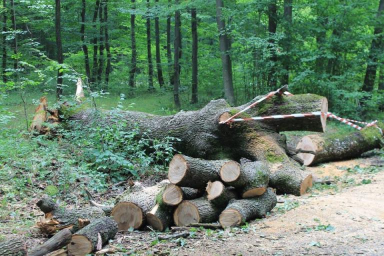 АЧС, дървен материал, Agrozona.bg