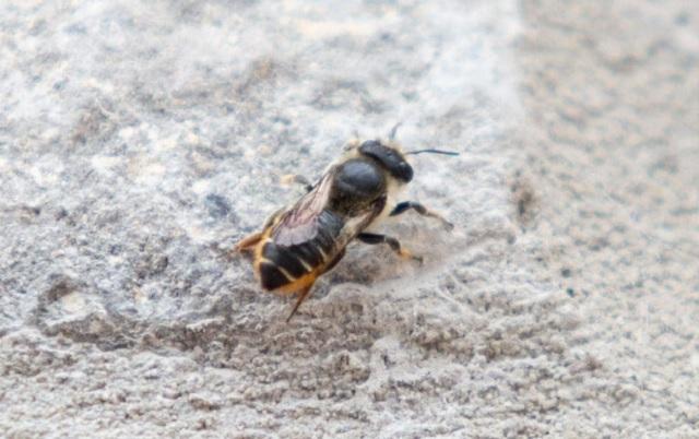Великобритания, Пчела, Agrozona.bg