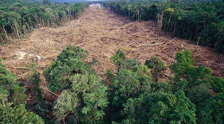 Амазония, Бразилия, Agrozona.bg