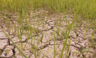 Задълбочава се дефицитът на водните запаси при земеделските култури