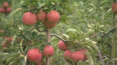 Идва суха и гореща седмица с опасност за овошките и зеленчуците