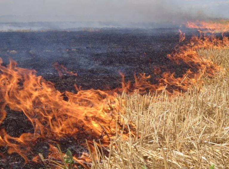 забрана, пожар, Agrozona.bg