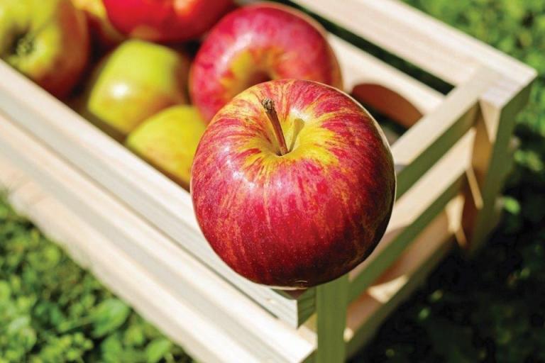 призводство на ябълки, Agrozona.bg