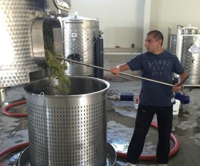 50% по-нисък добив на винено грозде регистрират в Шуменско