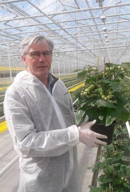 Новата оранжерийна мода: зеленчуци в саксии