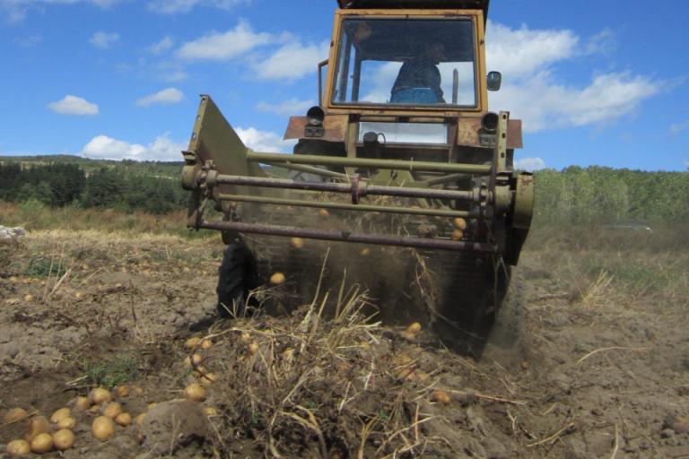 картофи, цена, Agrozona.bg