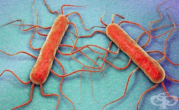 бактерия, Германия, Agrozona.bg